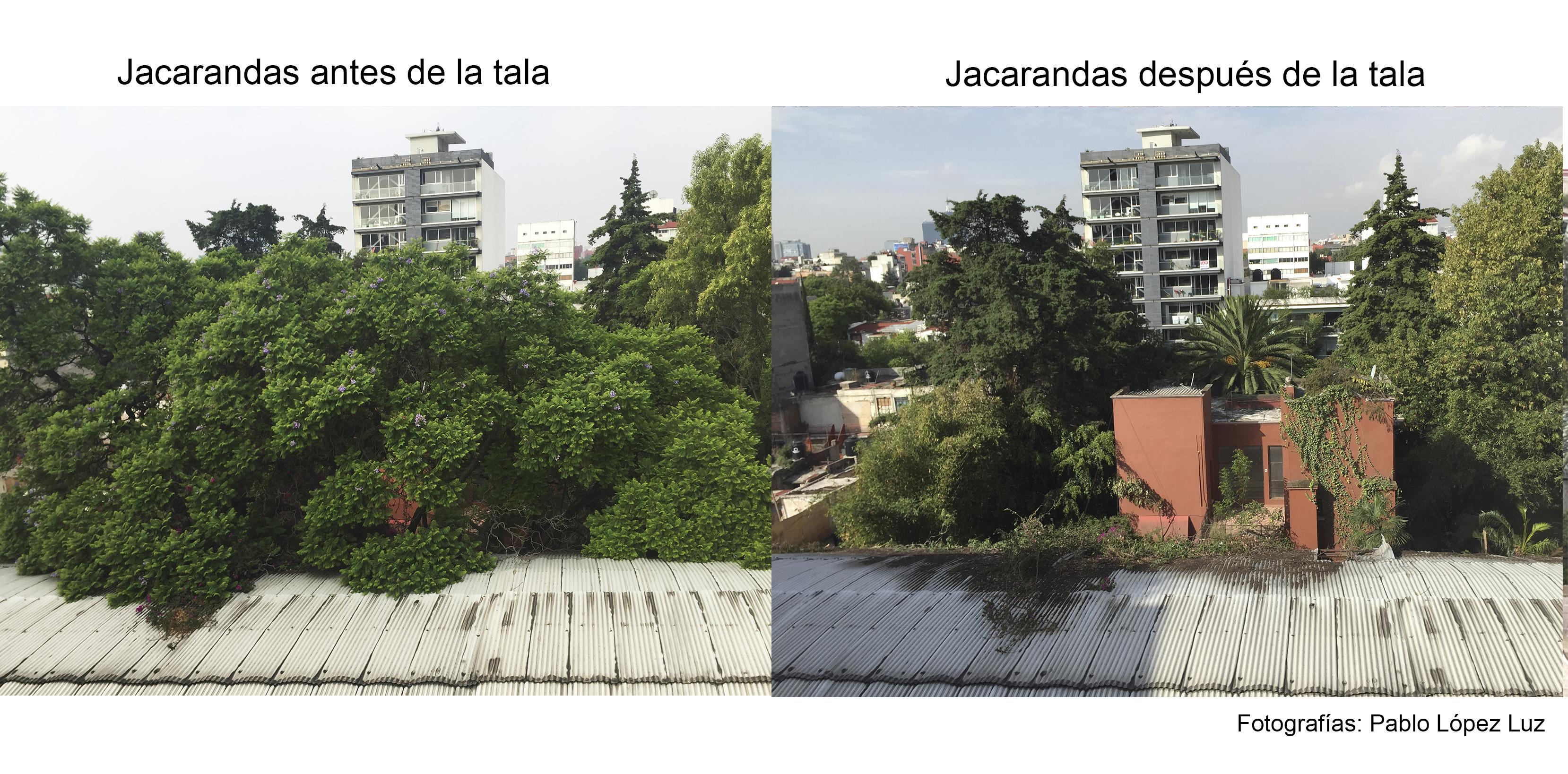 JACARANDAS antes y despues